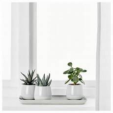 succulent pflanze mit 220 bertopf grau in 2019 pflanzen