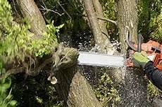 Baumstumpf Im Garten Verschönern - baumstumpf nat 252 rlich entfernen das mini hochbeet