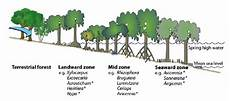 Gambar Beda Pengertian Antara Hutan Mangrove Payau Bakau