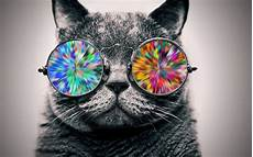 Katze Mit Sonnenbrille - cat glasses animals selective coloring wallpapers hd