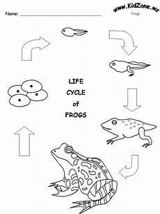 frog activity sheet frog life cycle