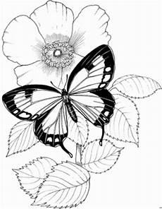 Malvorlage Schmetterling Mit Blume Schmetterling Mit Blume 2 Ausmalbild Malvorlage