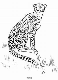 Malvorlagen Tiere Gratis Ausdrucken Animals Coloring Pages For To Print For Free