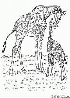 malvorlagen wilde tiere afrika kostenlose malvorlagen ideen