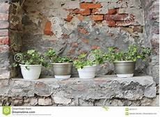 pot de fleurs extérieur 76170 mur en sale et pots de fleur photo stock image 68725171