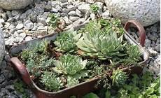 Hauswurz Deko Ideen - deko ideen shabby chic f 252 r den garten garden projects