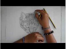 Speedpaint   Ritratto a matita di un gatto   Disegno