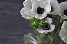 fiori in bianco e nero le bianche margherite in bianco e nero