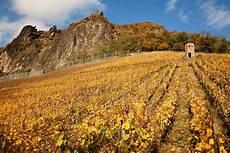h 236 nh ảnh phong cảnh đ 225 c 226 y nho vườn nho rượu nho