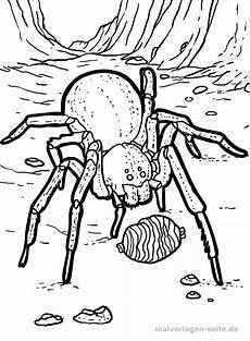 Ausmalbilder Malvorlagen Spinnen Malvorlage Spinne Gratis Malvorlagen Zum