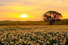 fiori di tutto il mondo ucraina 232 in fiore la valle dei narcisi la riserva pi 249