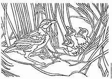 malvorlage vogel im nest malvorlage vogel mit nest kostenlose ausmalbilder zum
