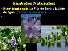 flor emblematica del estado guarico flor de bora para colorear imagui