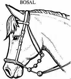 Ausmalbilder Pferde Western Pferd Mit Bosal Ausmalbild Malvorlage Tiere
