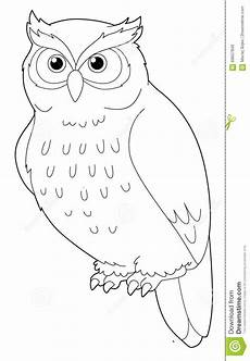 animal owl isolated coloring page stock