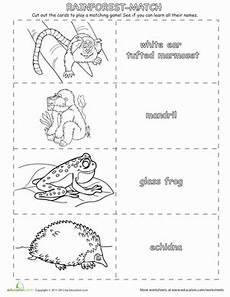rainforest animals worksheets elementary 13860 rainforest memory worksheet education