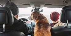 Touareg Gebraucht Worauf Achten - das passende auto f 252 r dich und deinen hund bestellen