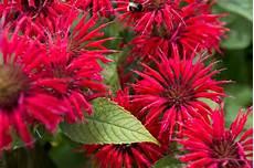alan s plants for august gardenersworld