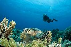 diving in fujairah a new underwater world radisson blu blog
