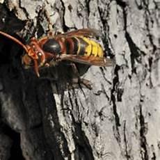 was hilft gegen mückenstiche insekten was hilft gegen m 252 ckenstiche brigitte de