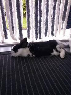 mein kaninchen frisst nicht