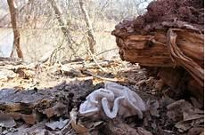 52 forms of fungi bromeleighad fiber art