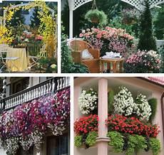 terrazzo fiorito tutto l anno balconi fioriti e terrazzi fioriti come progettarli in