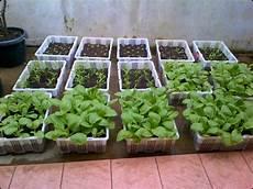 Kebun Sayuran Minimalis Di Rumah Taman Minimalis Di Rumah