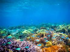 10 Gili Dengan Pemandangan Bawah Laut Yang Memukau Para