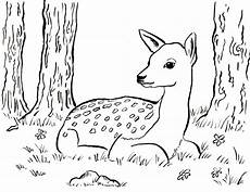 fawn coloring page starts for