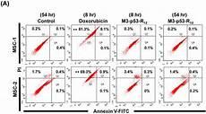 transduction of recombinant m3 p53 r12 protein enhances human leukemia cell apoptosis