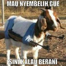 Gambar Gambar Meme Lucu Hewan Kurban Idul Adha Ngakak