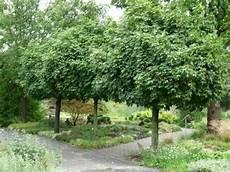 hausb 228 ume f 252 r kleine g 228 rten outdoor garden haus