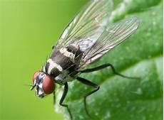 come allontanare le api dalle persiane disinfestazione mosche vigevano disinfestazione