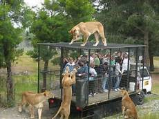 Taman Safari Indonesia Ii Prigen Pasuruan Desain