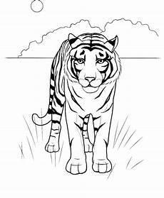 ausmalbilder malvorlagen tiger kostenlos zum ausdrucken