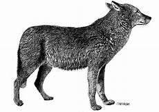 Malvorlagen Wolf Malvorlage Wolf Ausmalbild 8570 Images