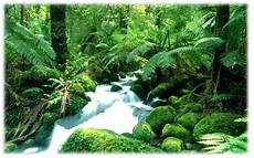 Pemandangan Alam Hutan Indonesia Pemandanganoce
