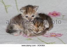 Katzen Junge Liegen Gemeinsam M 252 De Bett S 228 Ugetiere