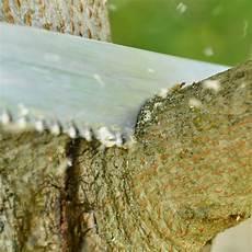bis wann darf bäume schneiden wann darf ich b 228 ume schneiden oder f 228 llen baumpflegeportal