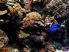 die schönsten aquarium fische süßwasser die 54 besten aquarium hintergrundbilder