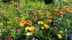 Bienenweide Bienen Hummelwiese Sommer Blumen Wiese