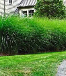 sichtschutz hecke pflanzen garten sichtschutz pflanzen