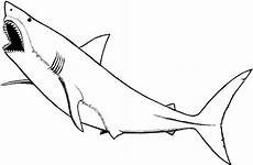 kumpulan gambar mewarnai hewan laut lengkap gambarcoloring
