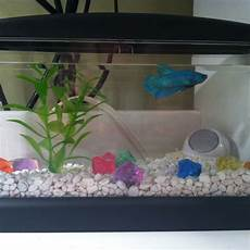 my new fish a 5 dollar tank from walmart and a light and my new betta ice betta fish