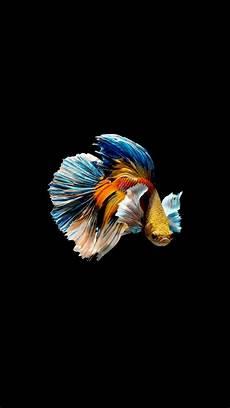 Cupang Hewan Lukisan Abstrak Ikan Cupang