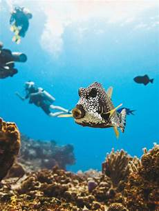 dive cozumel the ultimate guide to diving in cozumel cozumel dive