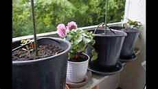 gardena bewässerungssystem verlegen gardena automatische bew 228 sserung ohne hauswasseranschluss