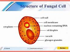 diagram of fungus what is the anatomy of fungi cells quora