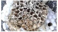 nid de guepes tarif de nid de gu 234 pes henrot taupier